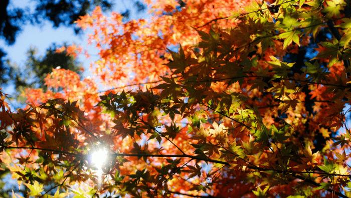 10 ting jeg glæder mig til i oktober