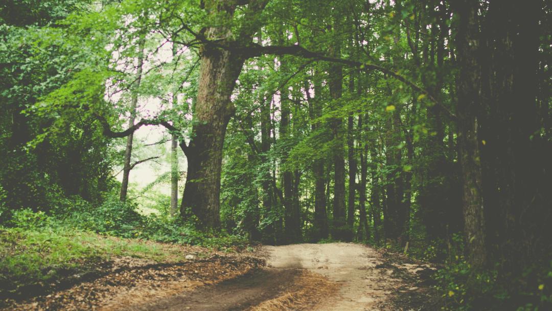Om at kortlægge sine gåture og få mere motion